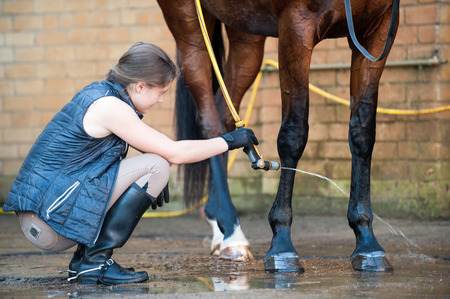 Young teenage lady washing horse hoof by stream of water from a hose. Vibrant multicolored summertime outdoors horizontal image.