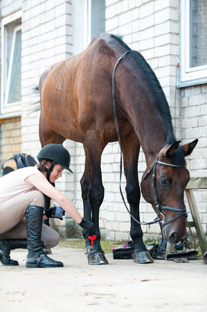 Groomer horsewoman taking care of chestnut horse hoof. Outdoors multicolored Vertical image. Stockfoto