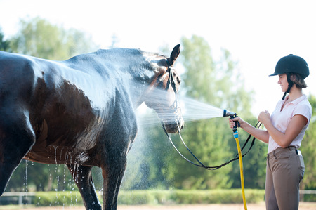 Young teenage girl equestrian washing her favorite brown horse in shower. Vibrant multicolored summertime outdoors horizontal image.