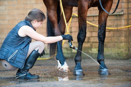 Young teenage girl equestrian washing hoofs and legs of horse in shower after training. Vibrant multicolored summertime outdoors horizontal image.