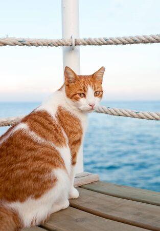 Red cat sitting and waiting on harbor of Mediterranean sea. Vibrant colored vertical summertime outdoors image with blue ocean background