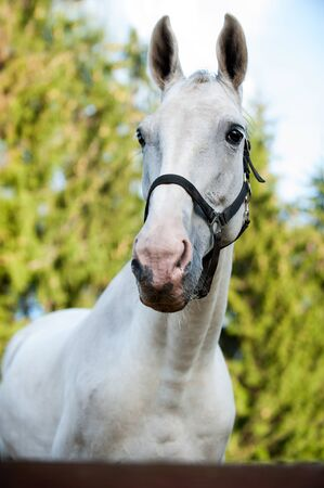 Portrait of graceful thoroughbred gray horse on sunny green leaves background. Multicolored vertical summertime outdoors image