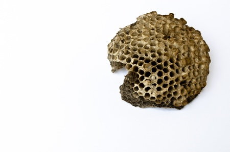 Wasps  Nest Stock Photo - 13134989