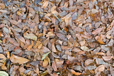 Autumnal Leaves Stock Photo