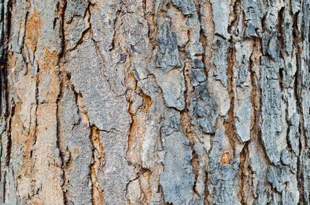 Bark Stock Photo - 13208297
