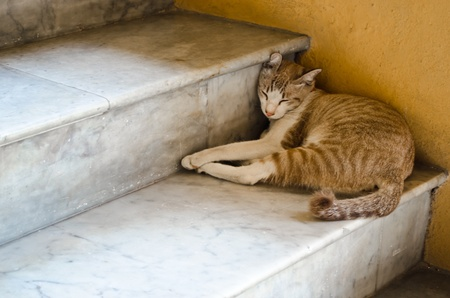 A light brown cat sleeping on a stair Stock Photo
