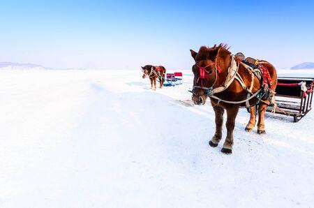 horse sleigh: Horse sledge on snow field