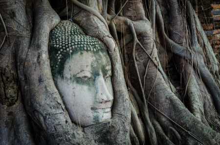 Ancient Buddhas face in a tree Stock Photo
