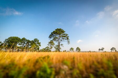 trees with dry grass field Stock Photo