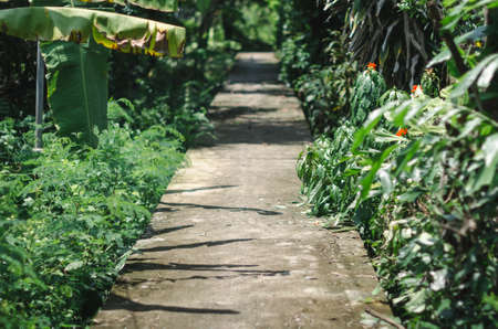 cement pathway among green plants in the woods