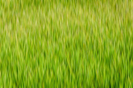 abstract background of green and yellow vertical line