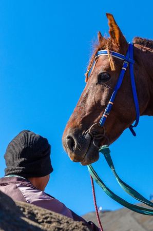 head and neck of brown horse with its owner Stock Photo