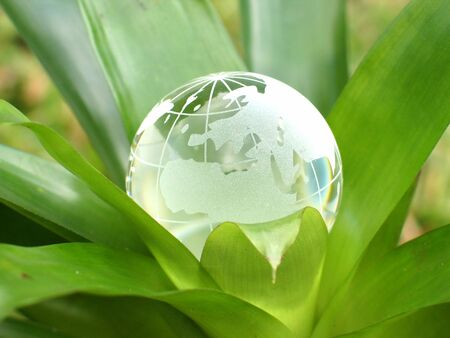 A crystal globe inside a plant. Concept representing growing world. Stock Photo