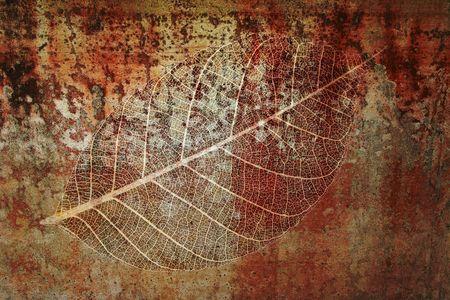 Foglia fossile montaggio elementi di design  Archivio Fotografico
