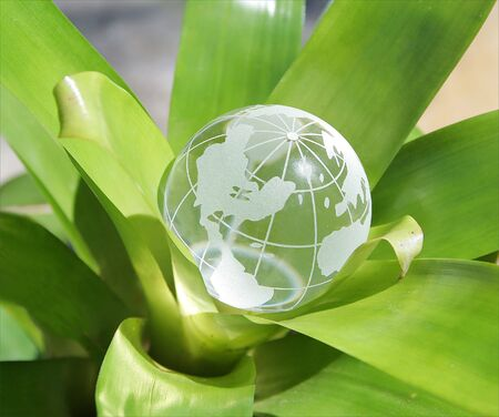 Budding World- US Version. A crystal globe inside a plant. Concept representing growing world.