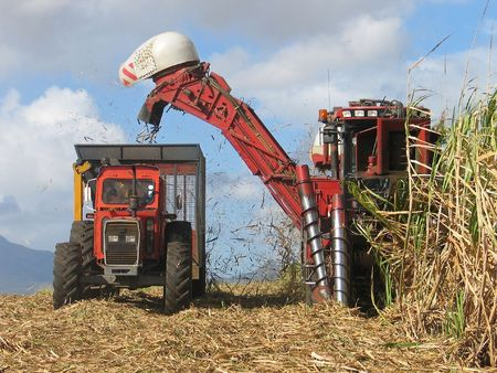 Sugar cane harvesting in Mauritius photo