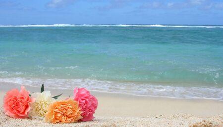 Bella garofano fiori sulla spiaggia