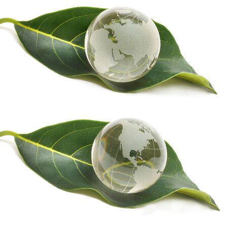 Concept of water drop on leaf- Ecology concept