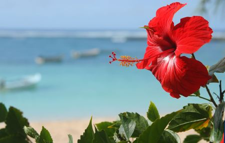 Red hibiscus flower by the sea Stock Photo