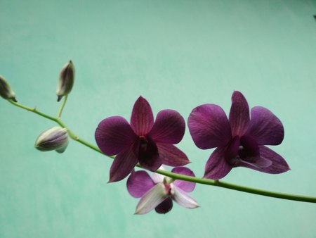 orchid Foto de archivo