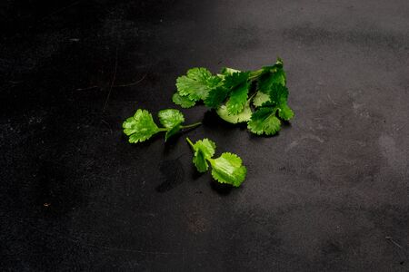 Fresh, green parsley shot on a black background close-up Stock Photo