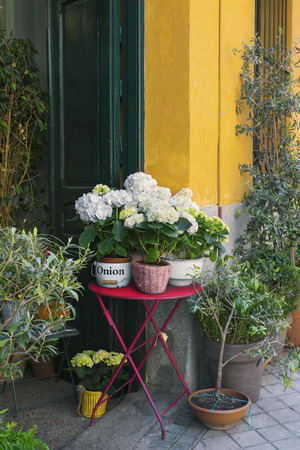 position d amour: Flowers in antique shop, vertical image Banque d'images