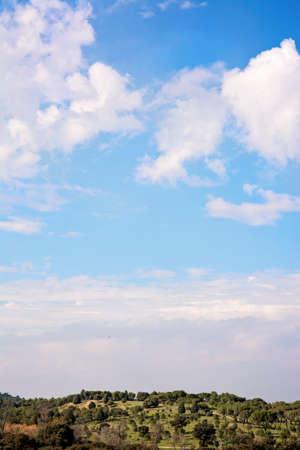 sky line: forest, sky line, vertical image