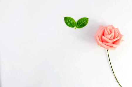 Roses and green leaves on white background