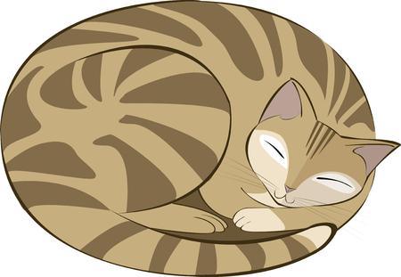 tabby cat: vector illustration of a brown tabby cat sleeping