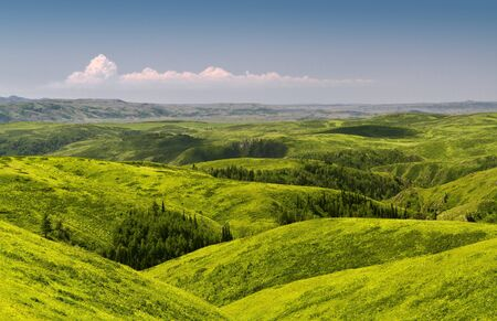 Green spring hills with scattered trees. Altai  Stock Photo - 13900439