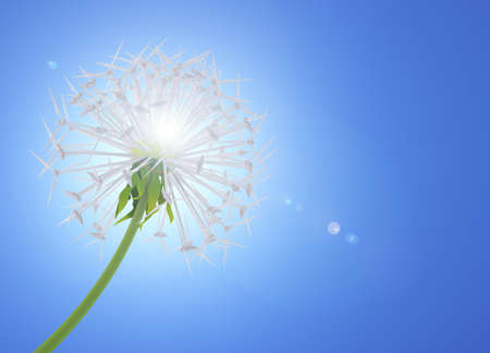 Dandelion flower symbolizes clean energy Stock Photo - 17502898