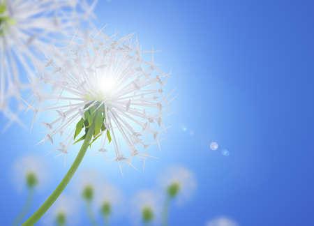 Dandelion flower symbolizes clean energy