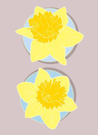 illustration of two daffodils  Stock Vector - 13747935