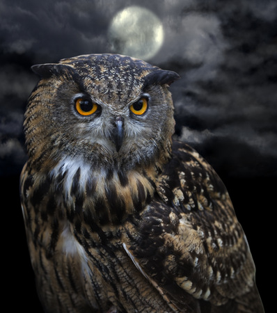 Illustrated picture of an owl in the darkness of night