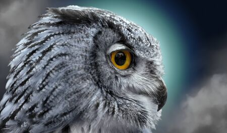 Close portrait of an owl in the night photo
