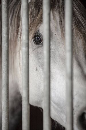part prison: Close-up picture of a white horse behind bars.