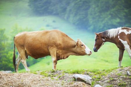 A cow meet a horse in a beautiful natural park.