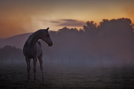 Picture of a horse at dusk with colored background.