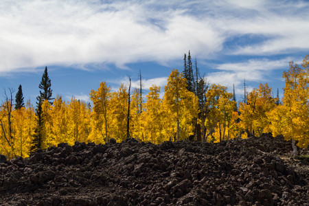 Amazing autumnal tree lined lava field in Dixie National Forest Utah near Cedar Breaks National Monument. Stock Photo