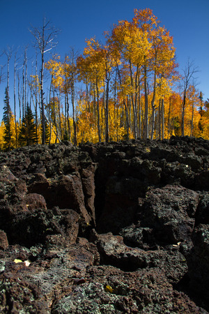 Close-up of the volcanic rock and lava field at Dixie National Forest in Utah in the autumn with fall foliage.