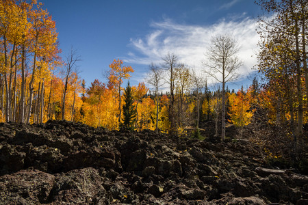 Bright and brilliant Dixie National Forest in the autumn with lava field in Utah near Cedar Breaks National Monument. Stock Photo