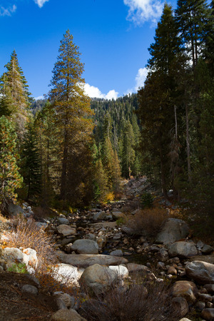 Big Blue sky, river and pine trees of the Tokopah Falls trail in Sequoia and Kings Canyon National Park in the fall.