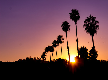 Incredible horizontal view of a vivid sunset with sunburst and silhouette of palm trees Zdjęcie Seryjne