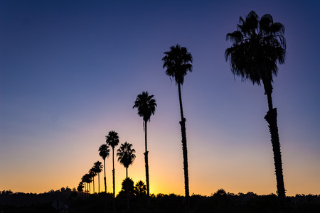 Beautiful view of a silhouetted row of palm trees at sunset. Zdjęcie Seryjne