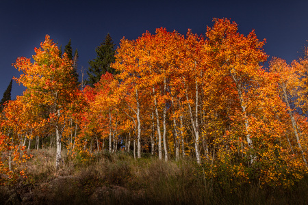 Spectacular saturated view of autumn leaf color at dusk in Southern Utah. Zdjęcie Seryjne