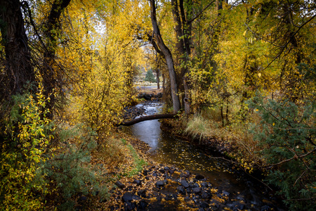 Beautiful meandering stream in a forest with bright glowing autumn leaves in Kolob Reservoir near Zion National Park, Utah USA.