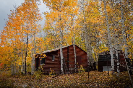Gorgeous log cabin amongst beautiful colored autumn leaves in Utah, USA.