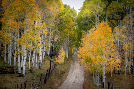 Gorgeous country road with bright autumn foliage  of aspen and birch trees in Southern Utah, USA. Zdjęcie Seryjne