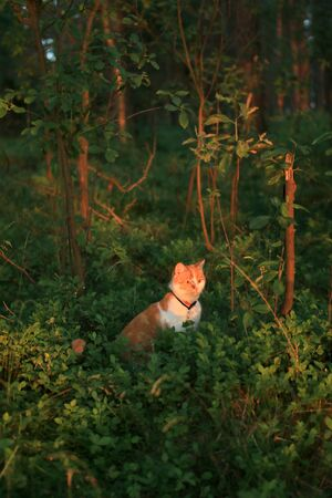 forrest: Cat in the forrest