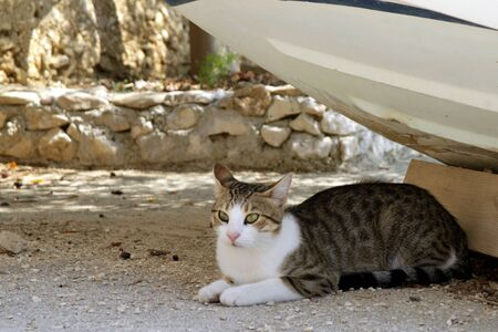 resting: resting cat